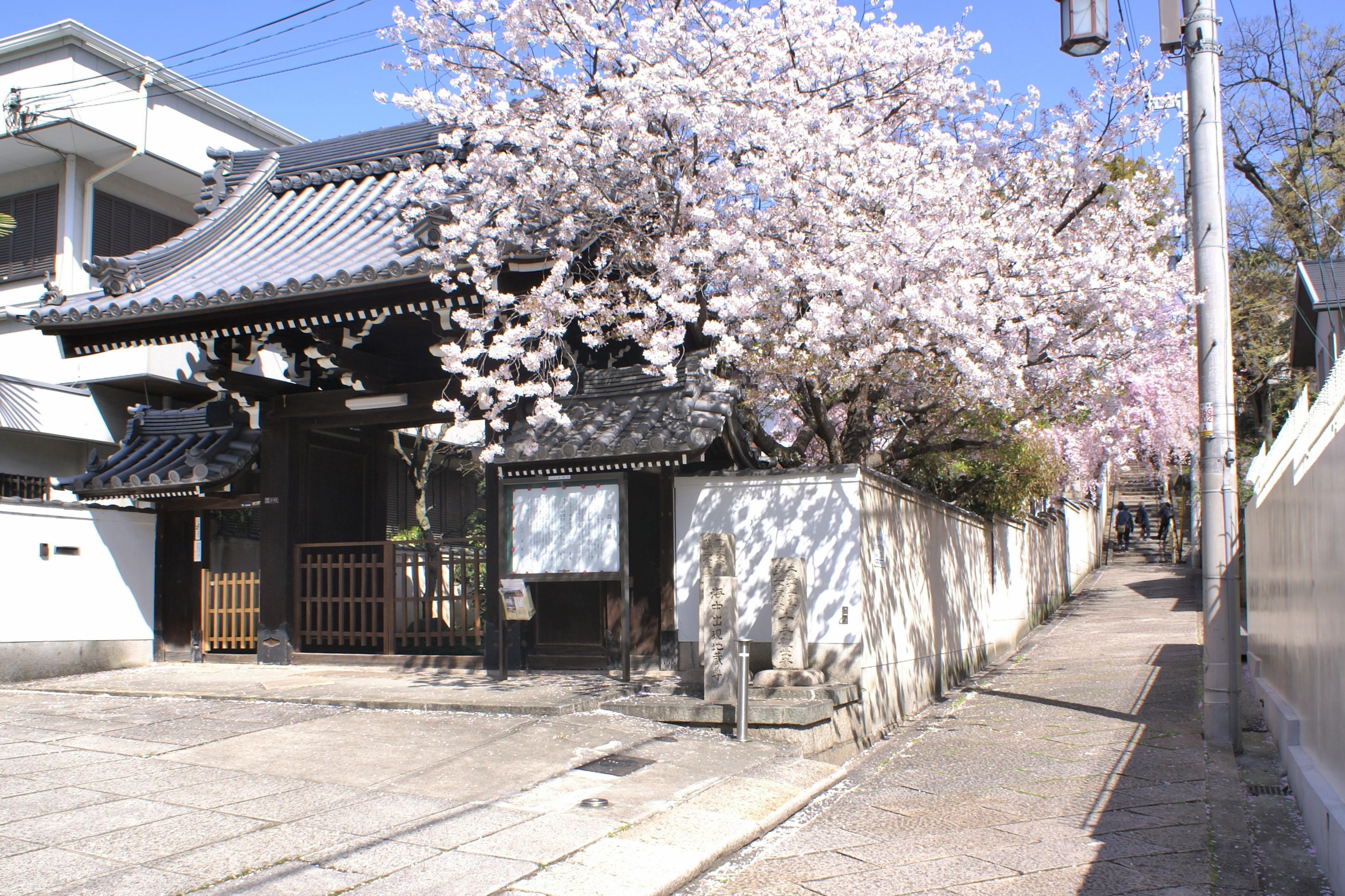 <p>善龍寺山門と口縄坂</p>善龍寺は境内南面、天王寺七坂の一つ口縄坂沿いに建つ。境内の桜が満開となり口縄坂を彩る。桜の名所としても有名である。門扉は、欅の一枚板で立派である。