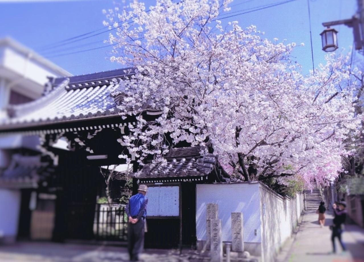 <p>善龍寺山門と口縄坂</p>