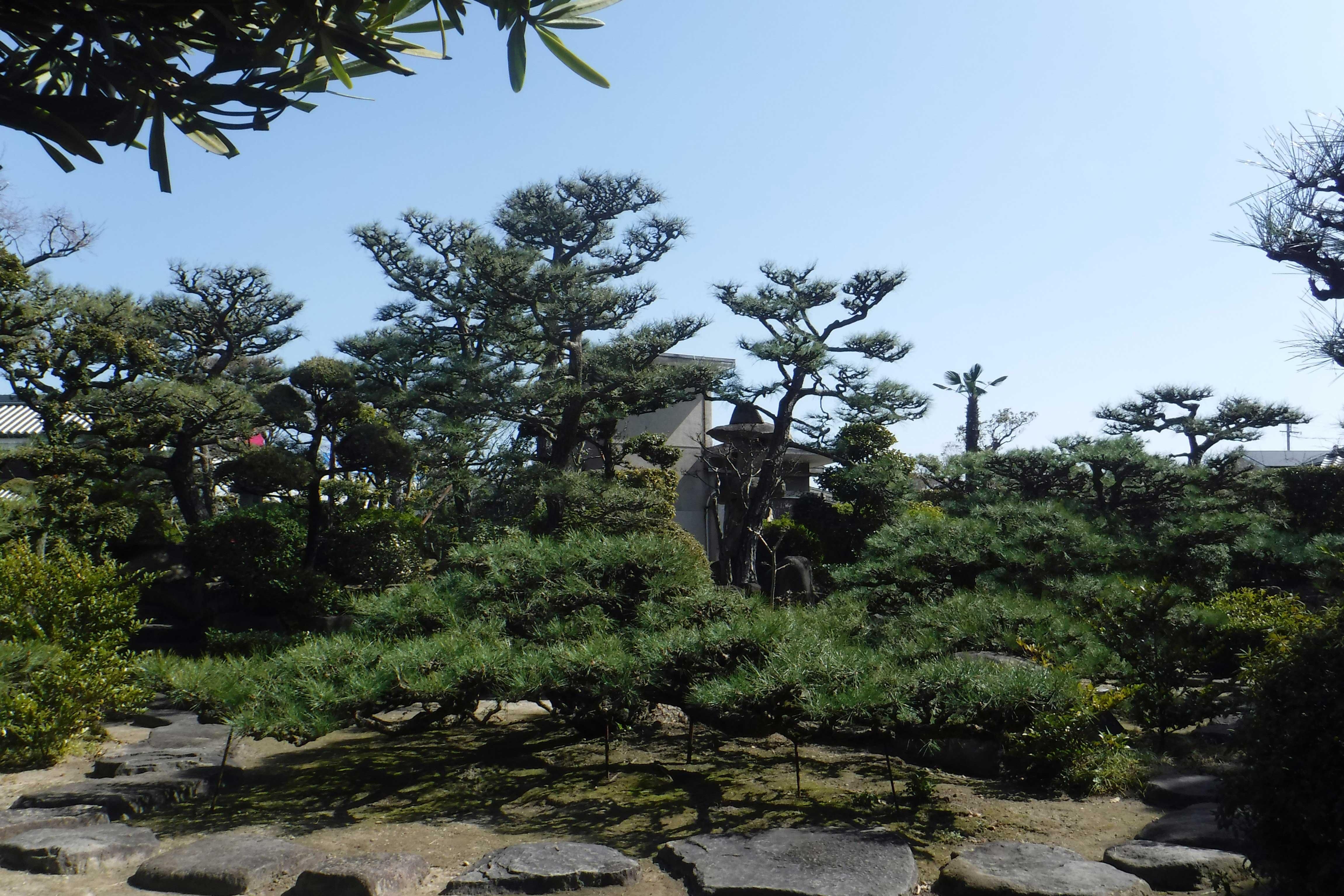 <p>庭園</p>松樹庭園。因現当主的祖父之名「楠治」而多植楠木樹。