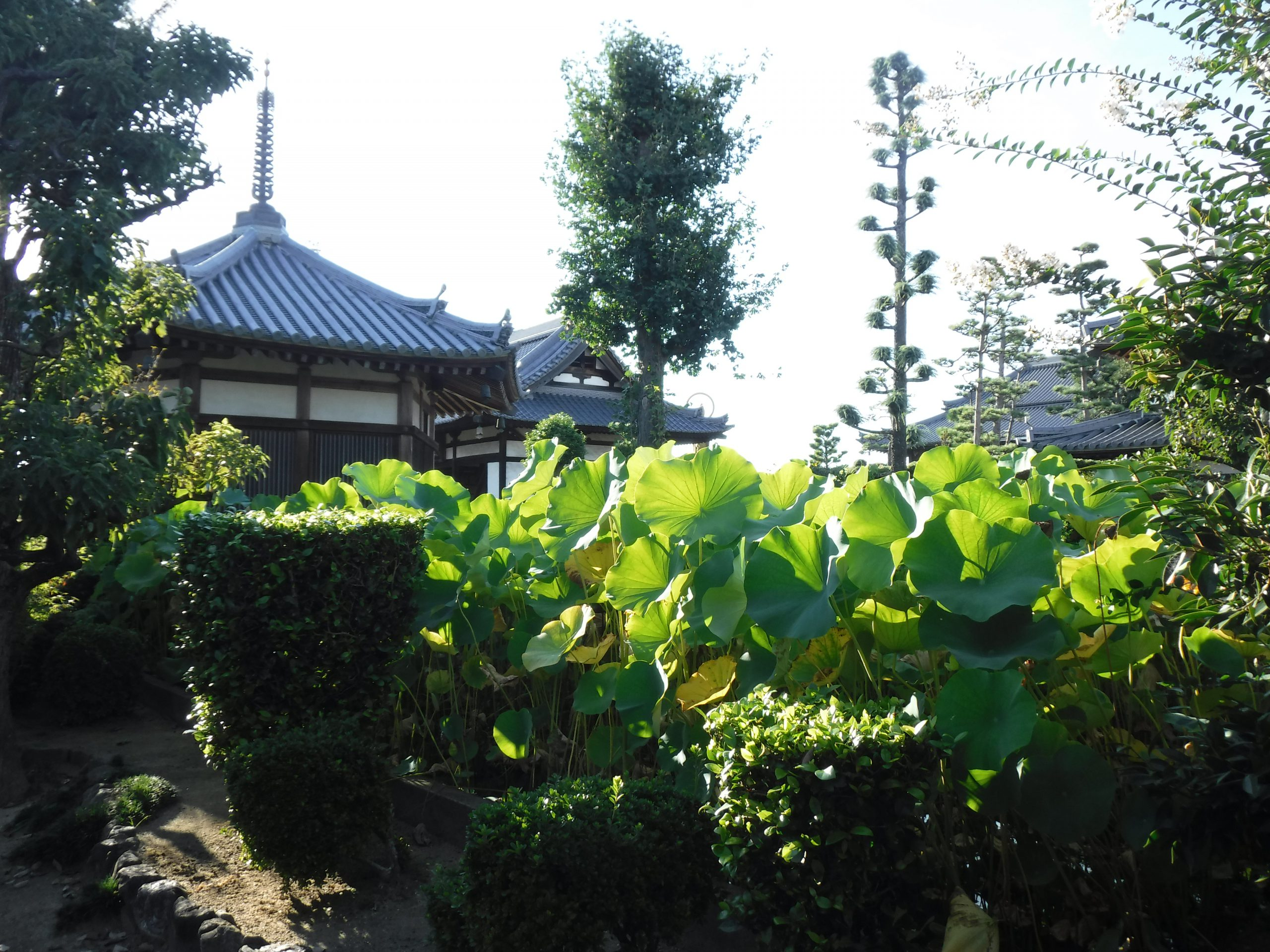 <p>境内庭園</p>5月の花祭りの頃には、市の花木でもあるツツジが境内一円に咲く。